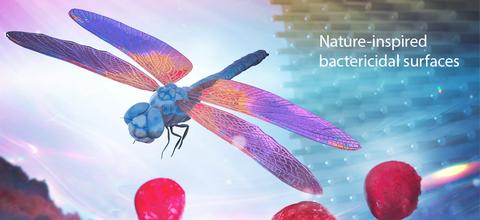 La naturaleza como base de investigación tecnológica