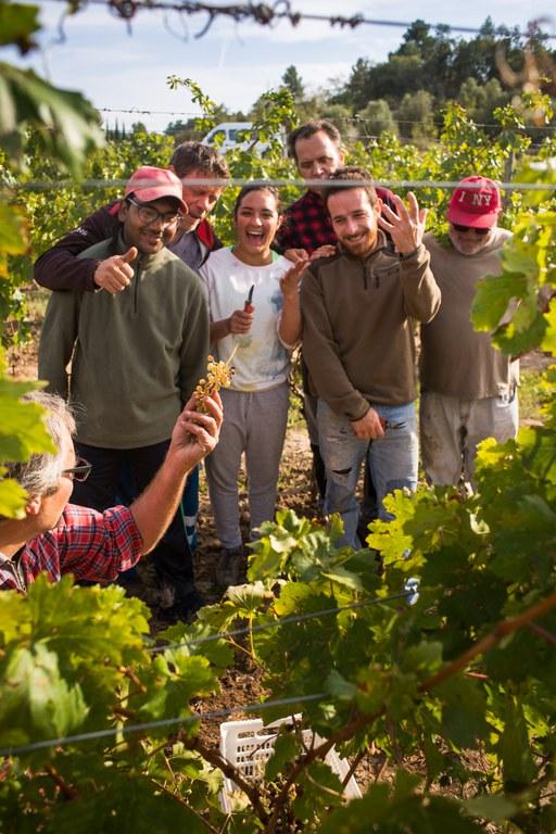 15 Last grape of the harvest_Ian_Brunell.jpg