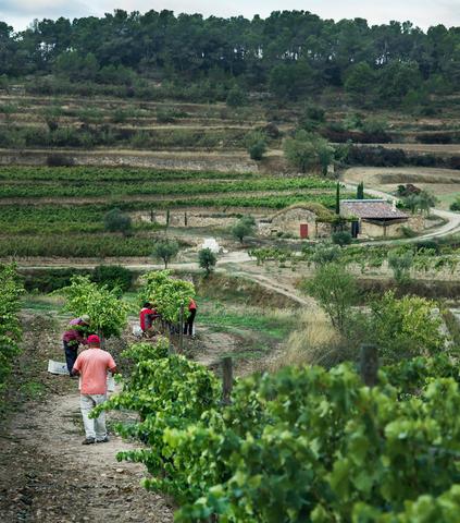 Otras experiencias: L'Olivera, una cooperativa en el mundo rural