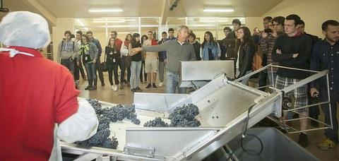 Basque Culinary Centerreko 100 ikasleek Arabako Errioxako bi bodega bisitatuko dituzte eta mahatsa biltzen ibili dira